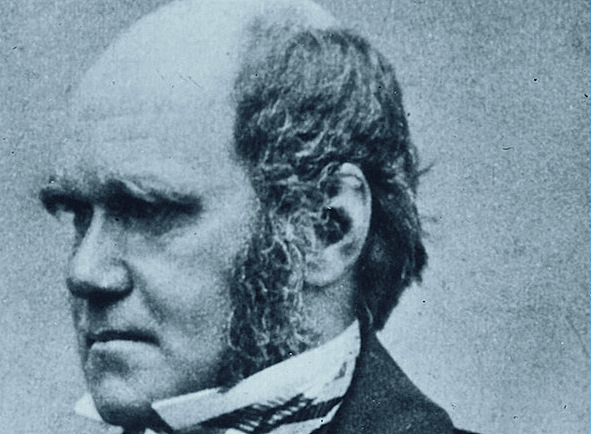portrait charles darwin midlife